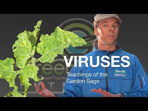 Viruses In Your Grow - The Garden Sage 11