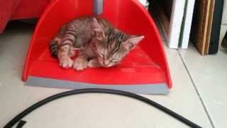 Pitzpitz the cat is sleeping in the dustpan
