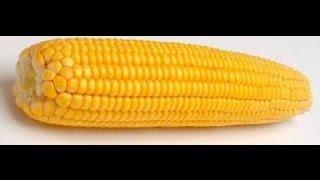 Кукуруза после заморозки