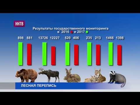 В Нижегородской области начался зимний учет численности диких зверей