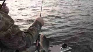 Lake Winnebago Walleyes - Trolling with Salmos and Flicker Shad