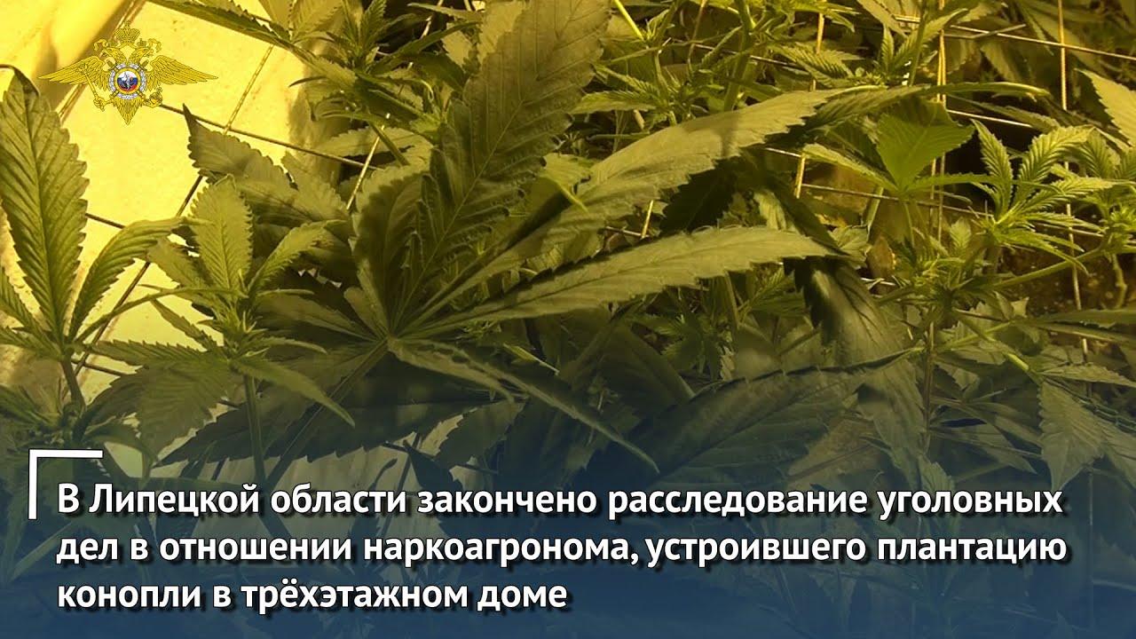В Липецкой области закончено расследование уголовных дел в отношении наркоагронома