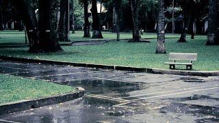 Mùa thu trong mưa (Trường Sa) - Vũ Trân