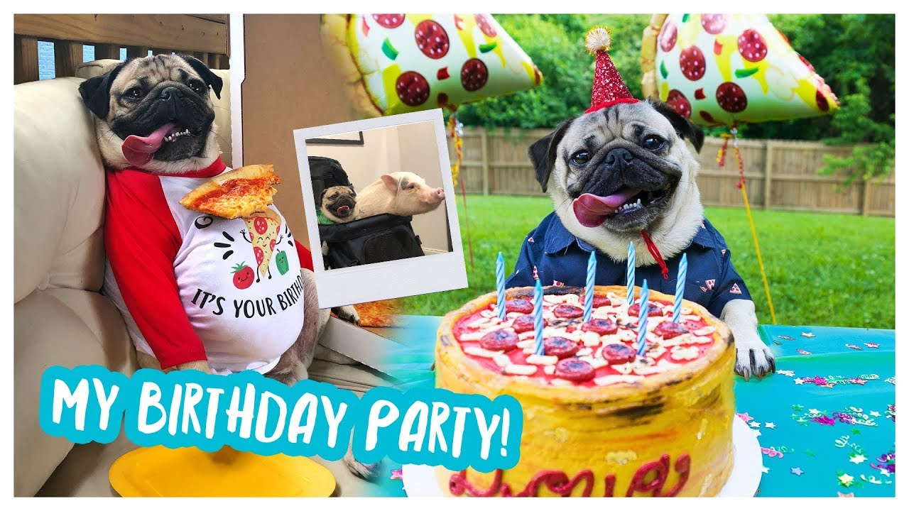 Doug The Pugs Birthday Party