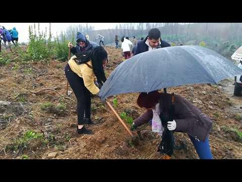 Sertã - Ação de reflorestação no Vale do Pereiro com 10 mil árvores autóctones