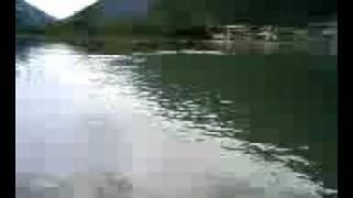 ウイッチョの夏休み 北アルプスの人工池でひとり張り切って泳いでいる ...