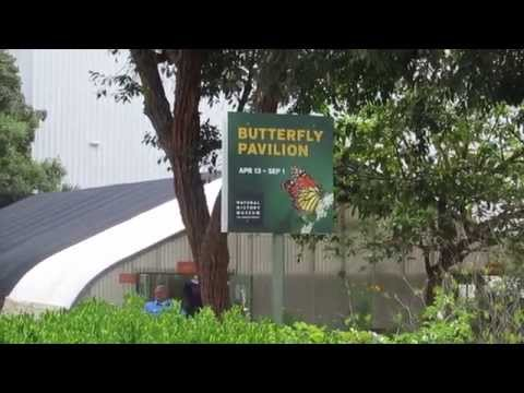 Fluttering Flowers: Butterfly Pavilion at the Los Angeles Natural History Museum