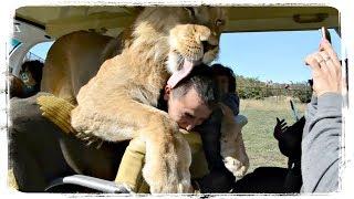 ПРИКОЛЫ С ЖИВОТНЫМИ ПОДБОРКА   FUNNY ANIMALS COMPILATION #557