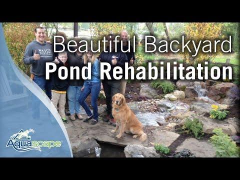 Beautiful Backyard Pond Rehabilitation