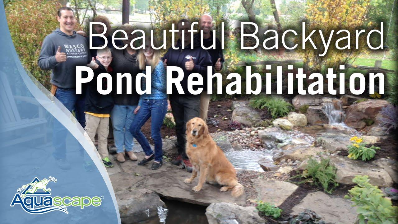 beautiful backyard pond rehabilitation youtube