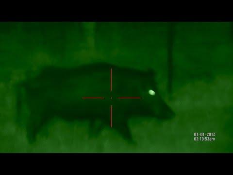 Hog Hunt ATN X Sight CZ 7.62x39
