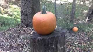 Pumpkin Killing Methods VI
