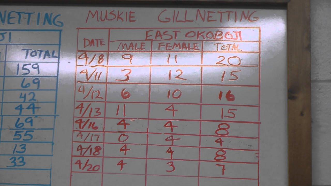 2013 Gill Netting Stats  for Northern, Walleye and Muskie, Spirit Lake Iowa  DNR Fish Hatchery