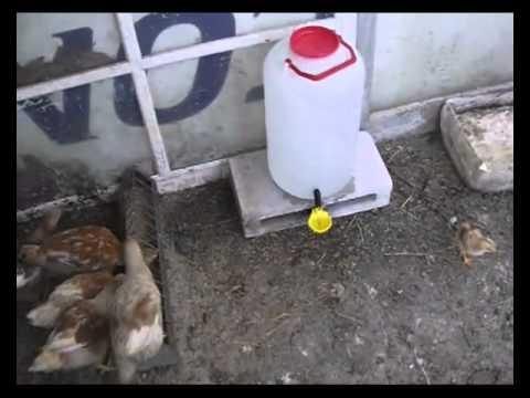 Bebedero f cil de hacer para pollitos youtube for Como hacer un criadero de peces en casa
