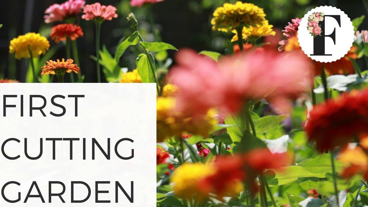Growing Flowers From Seed: First Cutting Garden Advice   Cut Flower Farm  Gardening For Beginners