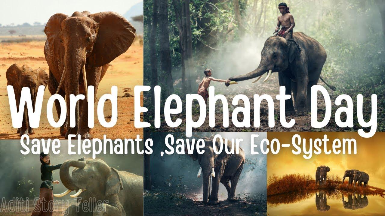 World Elephant Day 2021 | Celebrate World Elephant Day 2021 | Happy World  Elephant Day 2021 - YouTube