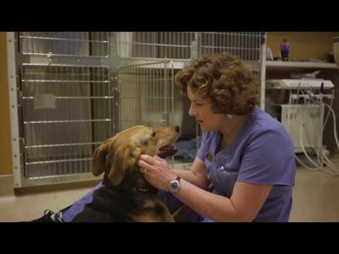 Compass Veterinary Clinic Is Fear Free Certified