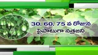 Bee Farming and Brinjal Cultivation - Eruvaka - 01-09-2014 - 99tv