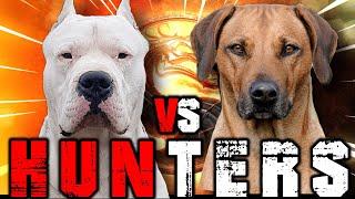Dogo Argentino vs Rhodesian Ridgeback | Rhodesian Ridgeback vs Dogo Argentino | Billa Boyka |