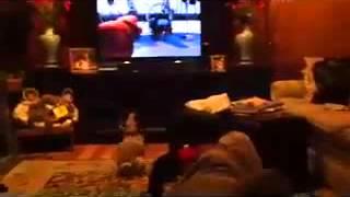 Pug Obeys A Cartoon Dog