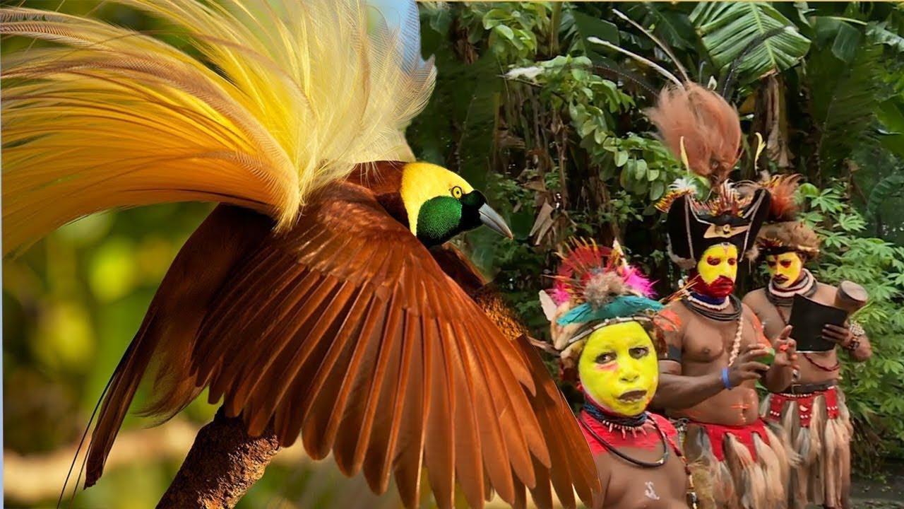 Amazing Bird of Paradise And Papua New Guinea Dance