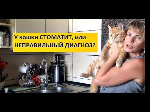 Вопрос: Как диагностировать и лечить язвы во рту у кошек?
