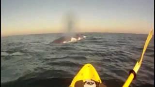 Un paseo en el mar acompañado por una ballena azul gigante