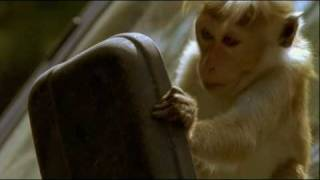 Clever Monkeys BBC - Hilarious