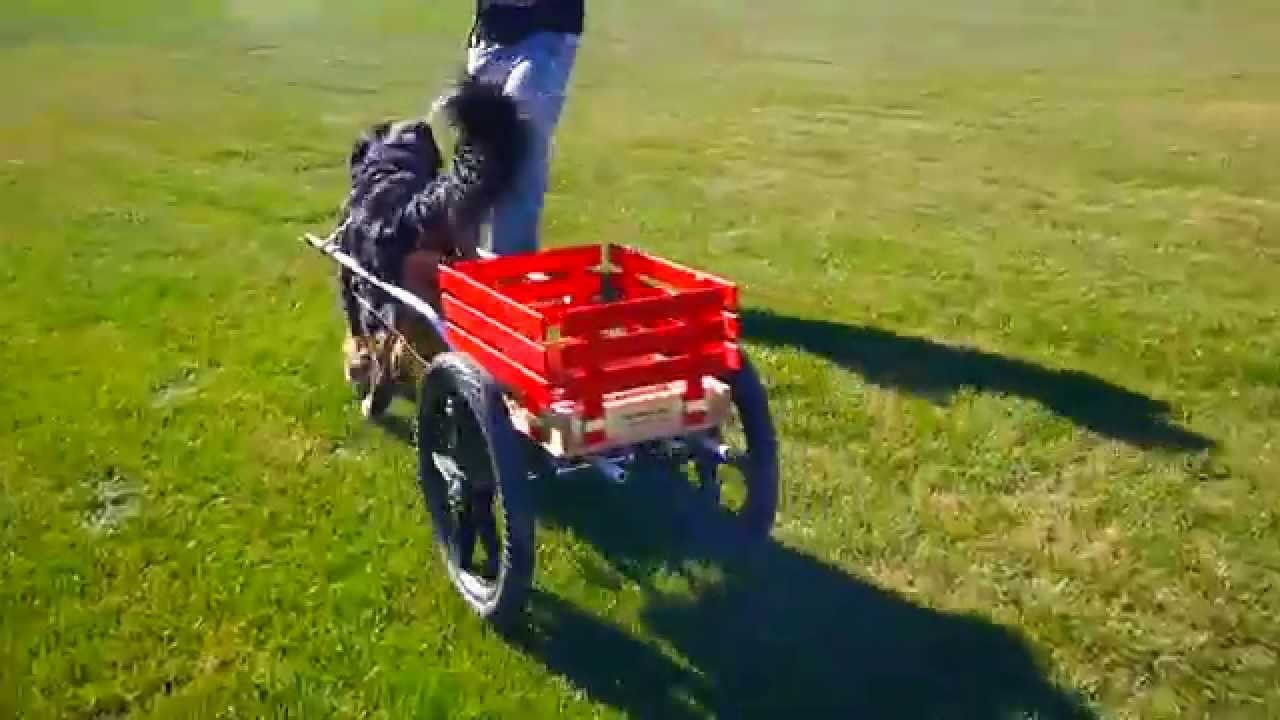 how to build a dog pulling cart