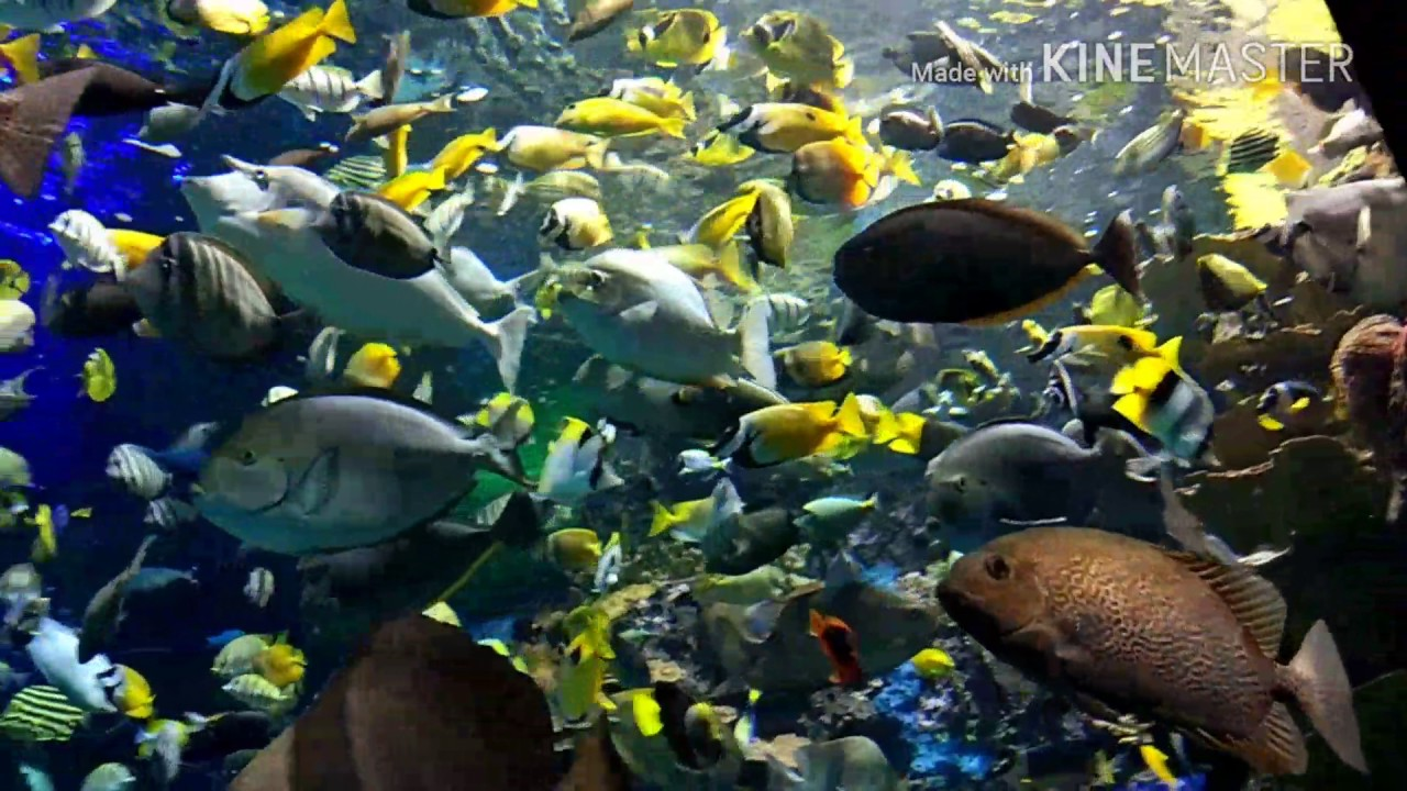 Fish aquarium in downtown toronto - Toronto Tour 2017 Cn Tower Ripley S Aquarium Downtown Toronto