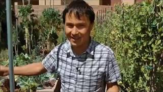 Джон Колер, веган-сыроед 23 года. Мужчина без возраста питается сырой зеленью со своего двора.