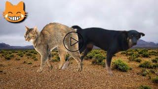 Dog Cat Meeting & Friendship & Fighting