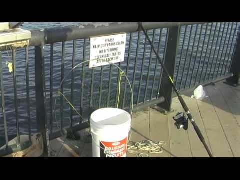 Pier fishing in new jersey june 2009 youtube for Pier fishing net
