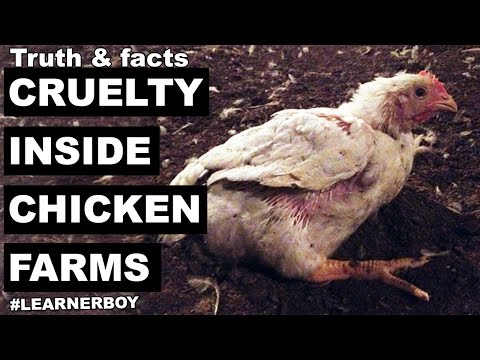 Don't be a Chicken. Seriously | Cruelty inside chicken industry/poultry farm | you must know