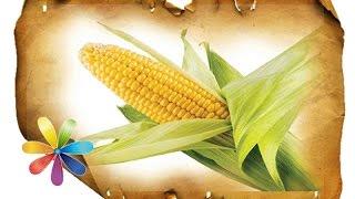 Выбираем кукурузу - Все буде добре - Выпуск 432 - 24.07.2014 - Все будет хорошо - Все будет хорошо