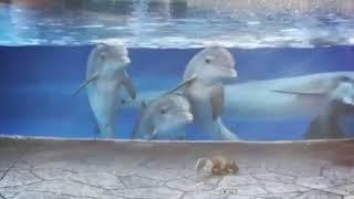 【かわいすぎ!】初めてリスをみたイルカが可愛すぎる!!! thumbnail