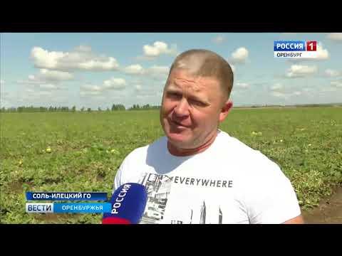 Арбузная столица России готовится к новому сезону: в Соль-Илецком р-не ждут большой урожай бахчи