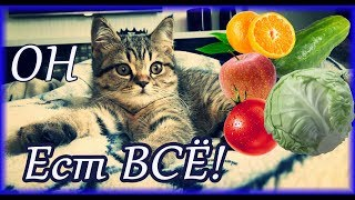 Ужин кота - квашенная капуста и клюква / The cat eats everything