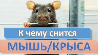 К чему снится мышь (крыса) | СОННИК