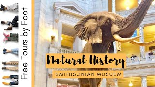 Visiting the Natural History Smithsonian Museum