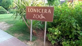 Lonicera ZOO   Animals in Hotel   Lonicera Resort   Turkey