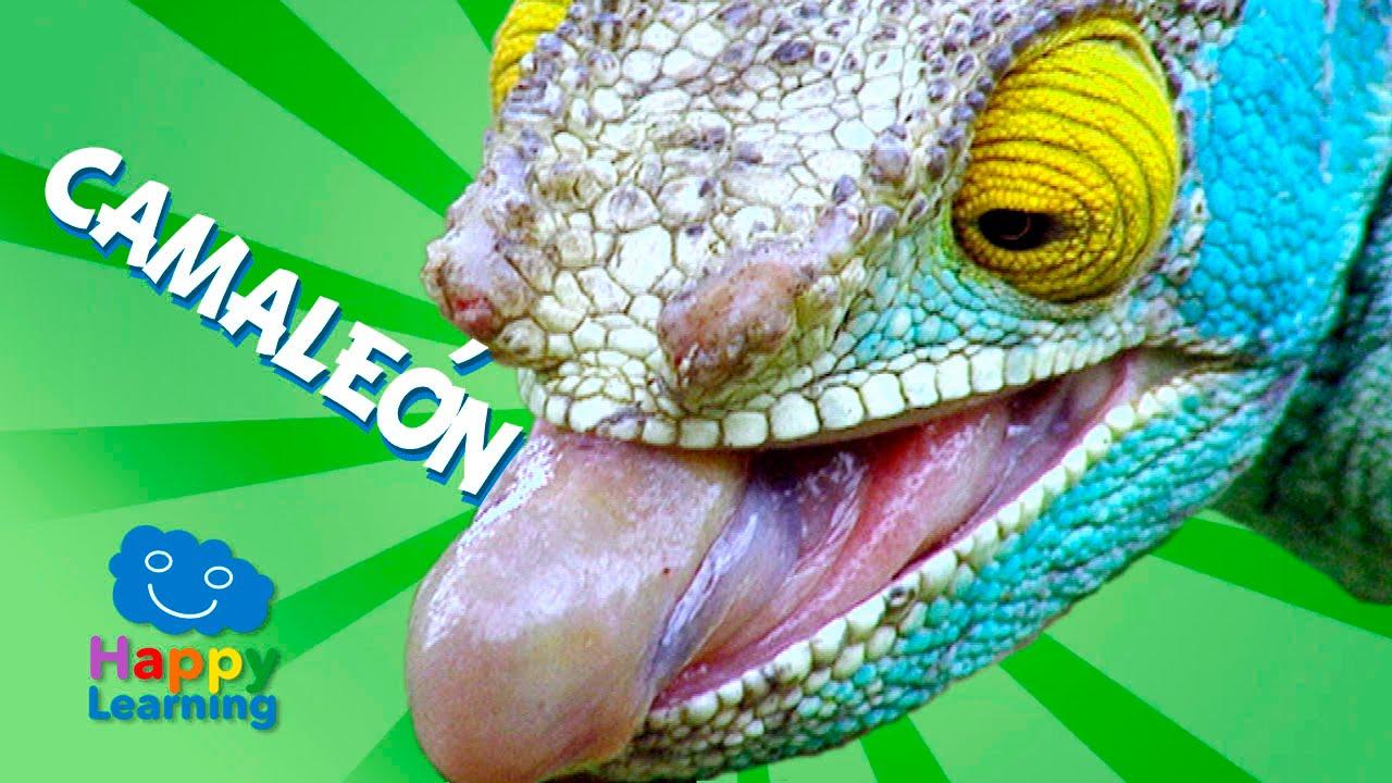 videos infantiles el camale n para ni os youtube On camaleon en ingles
