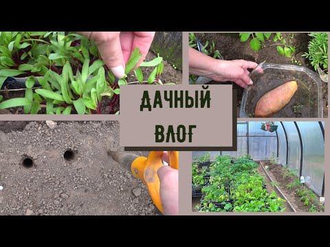 ✅ВЛОГ/Батат-что за овощ. Высаживаю рассаду свеклы.
