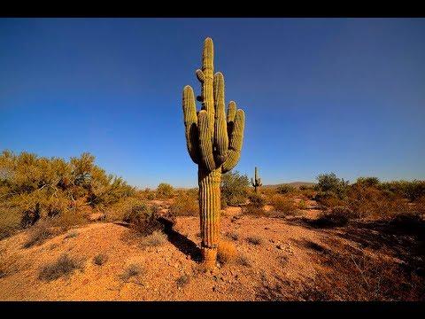 Дальнобой по США. Пустыня Аризоны. Кактусы. Поломка в траке. Американская мастерская.