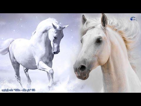 حقائق مذهلة لا تعرفها عن الخيول