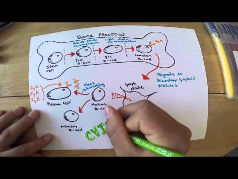 CVID Immunology Project