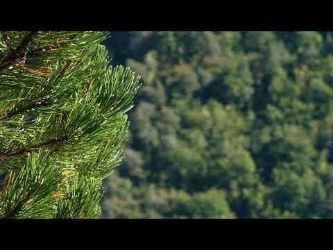 Images du Parc national des Cévennes 1