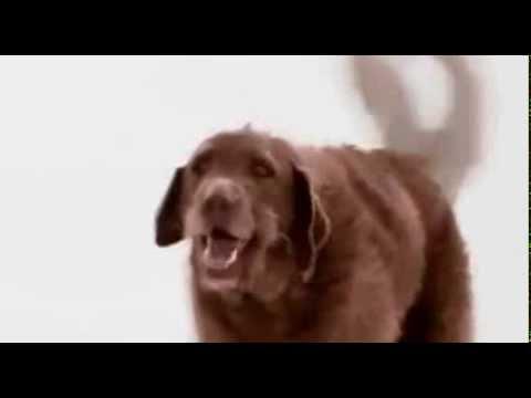 прикольный клип биг тайм раш с собаками