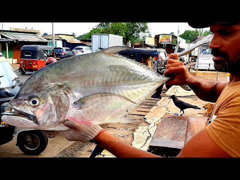 GIANT TREVALLY FISH CUTTING | FRESH FISH CUTTING SKILL | කටකලුවා(පරවා)