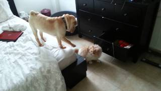 הכלב אונס את החתול- מה באמת קרה שם??